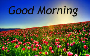 Good Morning Images photo pictures free hd download