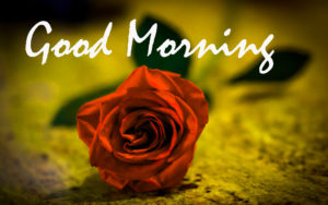 Beautiful Good Morning Images For Him pictures photo download