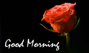 Beautiful Good Morning Images For Him wallpaper pics download