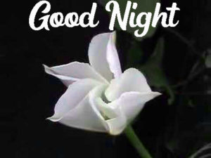 Good Night Images photo pics free hd