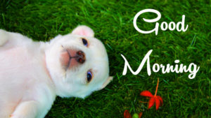 Puppy Good Morning Images wallpaper pictures photo hd download