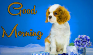 Puppy Good Morning Images photo pics download