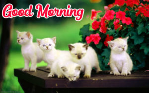 Beautiful Good Morning Love Images pics photo for facebook