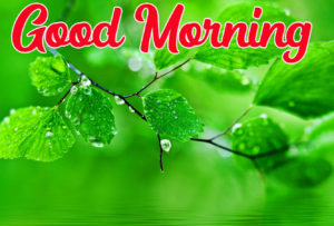 Beautiful Good Morning Love Images wallpaper photo picture for  whasapp