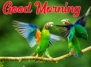 Beautiful Good Morning Love Images pics photo picture for friend