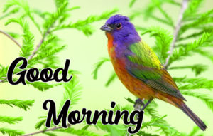Beautiful Good Morning Love Images wallpaper photo picture for boyfriend