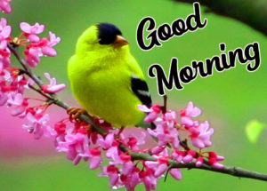 Beautiful Good Morning Love Images wallpaper photo picture for facebook