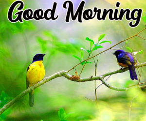 Beautiful Good Morning Love Images wallpaper photo pics for lover