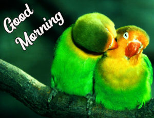 Beautiful Good Morning Love Images wallpaper photo picture pics for best friend