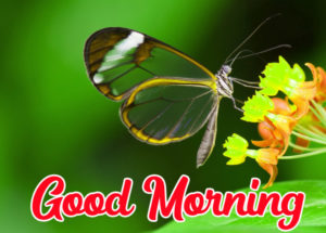 Beautiful Good Morning Love Images wallpaper pics photo picture for facebook
