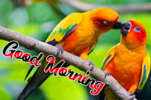 Beautiful Good Morning Love Images picture photo pics download