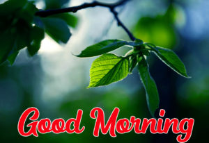 Beautiful HD Good Morning Love Images picture photo for friend