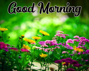 Beautiful Good Morning Love Images wallpaper pics photo for facebook
