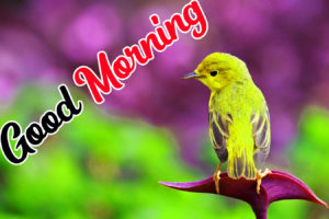 Beautiful Good Morning Love Images wallpaper pics photo for friend