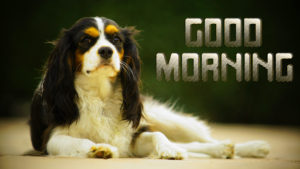 Puppy Good Morning Images wallpaper free hd download