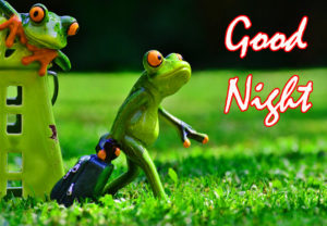 Funny Good Night Images wallpaper photo hd