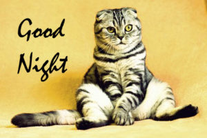 Funny Good Night Images wallpaper photo hd download