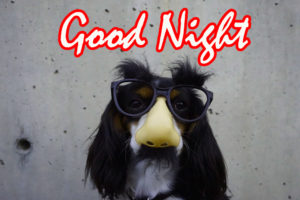 Funny Good Night Images photo pics free download