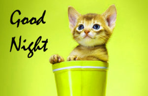 Funny Good Night Images photo wallpaper download
