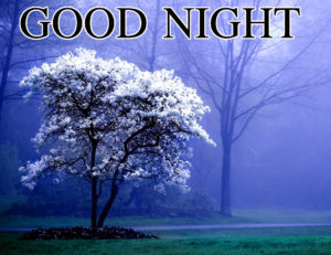 Nature Good Night Images photo wallpaper download