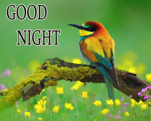Good Night Images photo pictures hd