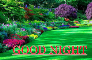 Good Night Images photo pictures download hd