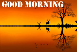 Good Morning Images wallpaper pics download hd