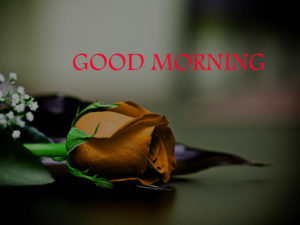 Love Good Morning Images pics photo free hd