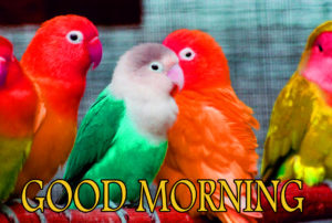 Love Good Morning Images wallpaper pics free download