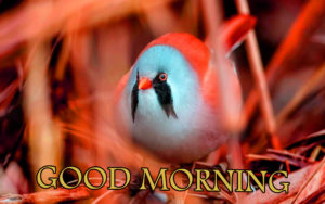 Love Good Morning Images photo pictures free hd