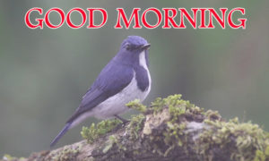 Love Good Morning Images photo wallpaper for facebook