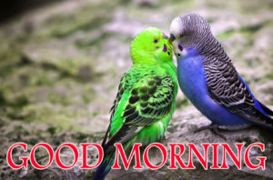 Love Good Morning Images photo wallpaper download