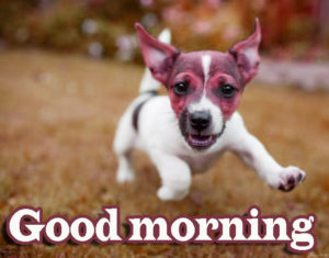 Puppy Good Morning Images Wallpaper Pics Download
