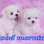 1175+ Puppy Good Morning Images Pics Wallpaper for Whatsapp