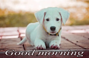 Puppy Good Morning Images pictures pics free hd download