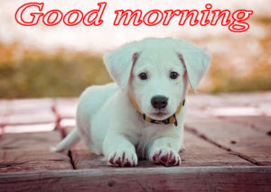 Puppy Good Morning Images pics photo for facebook