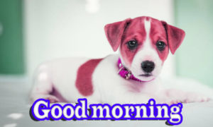 Puppy Good Morning Images photo wallpaper hd download
