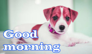 Puppy Good Morning Images pics photo free hd