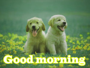 Puppy Good Morning Images photo pics free hd