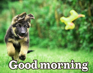 Puppy Good Morning Images pictures photo hd