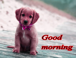 Puppy Good Morning Images photo wallpaper free download