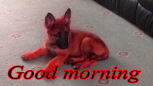 Puppy Good Morning Images wallpaper photo for facebook