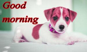 Puppy Good Morning Images pictures photo download