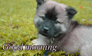 Puppy Good Morning Images wallpaper pictures free hd