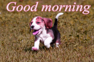 Puppy Good Morning Images photo wallpaper for facebook