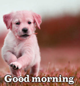 Puppy Good Morning Images photo pics hd