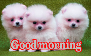 Puppy Good Morning Images wallpaper photo download