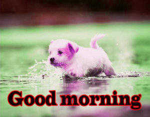Puppy Good Morning Images photo pics for facebook