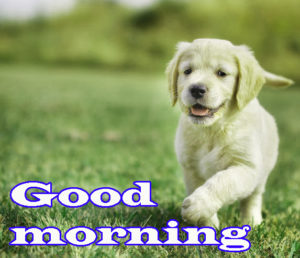 Puppy Good Morning Images photo wallpaper download