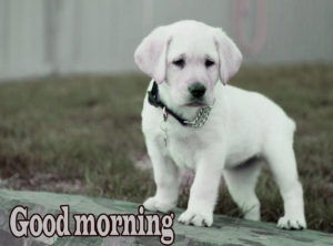 Puppy Good Morning Images photo pictures for facebook